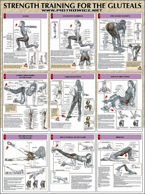 Strength Training Exercises for Glutes